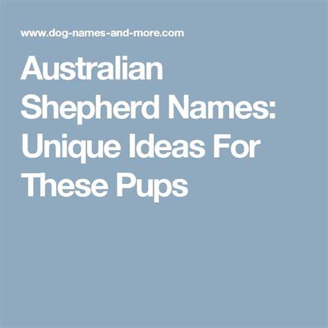 australian names best 25 australian shepherd names ideas on australian shepherds aussie