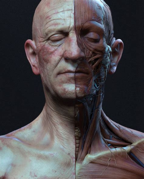 male ecorche human anatomy reference 3d model 3d pin by remi kalisz on zbrush mudbox anatomy zbrush and anatomy reference