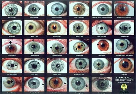 eye colors list with pictures human eye color chart go back gt gallery for gt