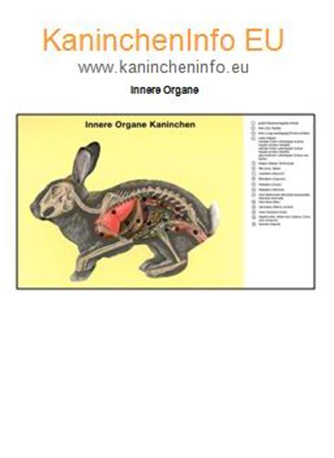 übersicht Kalender 2015 Search Results For Bersicht Organe Mensch Calendar 2015