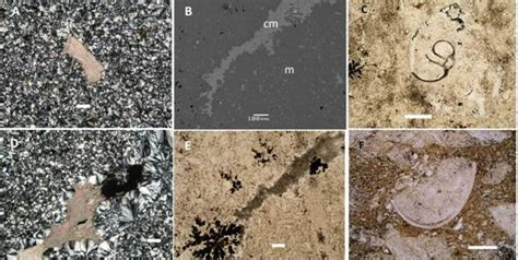 sparite thin section quot mucientes chert quot in the northern iberian plateau spain