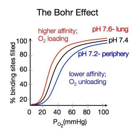 bohr effect diagram pin bohr effect on