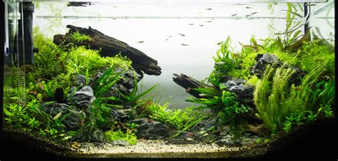 Aquascaping Techniques by Aquascaping D 233 Finition Et Techniques Ooreka