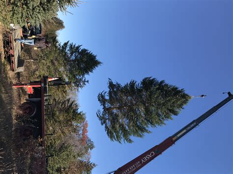 spruce acres farm donates christmas trees for washington