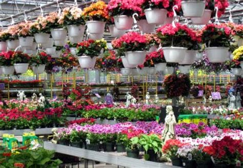 merediths garden blog  garden centre picks stores