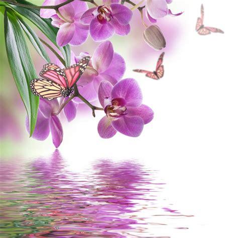 achtergrond bloemen rustig fotobehang bloemen van tropische orchidee 235 n en vlinder