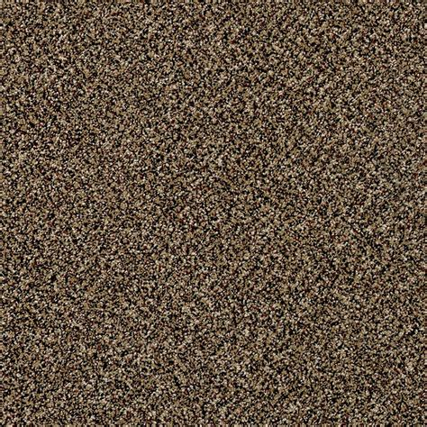 home decorators collection carpet sle wholehearted i