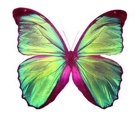imagenes de mariposas reales para imprimir amo a shane gray mariposa png