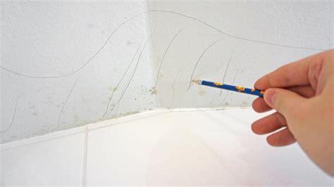 bleistift wand entfernen schimmel an der decke beseitigen anleitung tipps vom