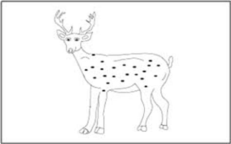 animal coloring  tracing pages