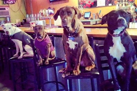 puppy bar small business the bar is the leash in noda
