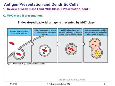 antigen presentation dendritic cell www antigen presentation and dendritic cells ppt
