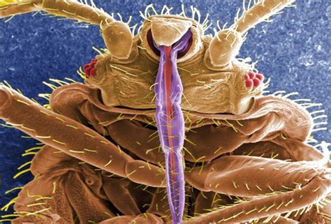 can you get sick from bed bugs insecticides used to fight bed bugs can cause illness