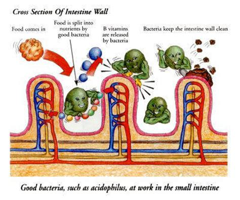 Signs Of Detox In Stools by Bowel Colon Cleanse By Dr Clark