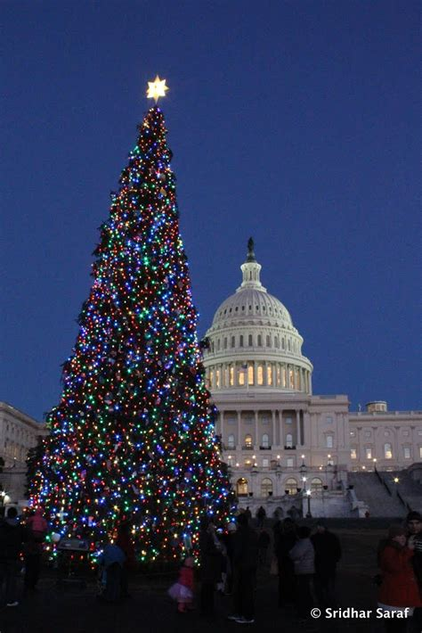 panoramio photo of capitol christmas tree lighting