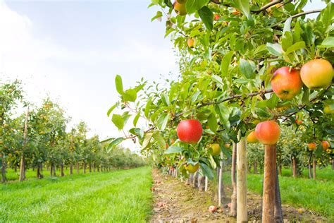 Apple Orchard | take your pick the best apple orchards around william
