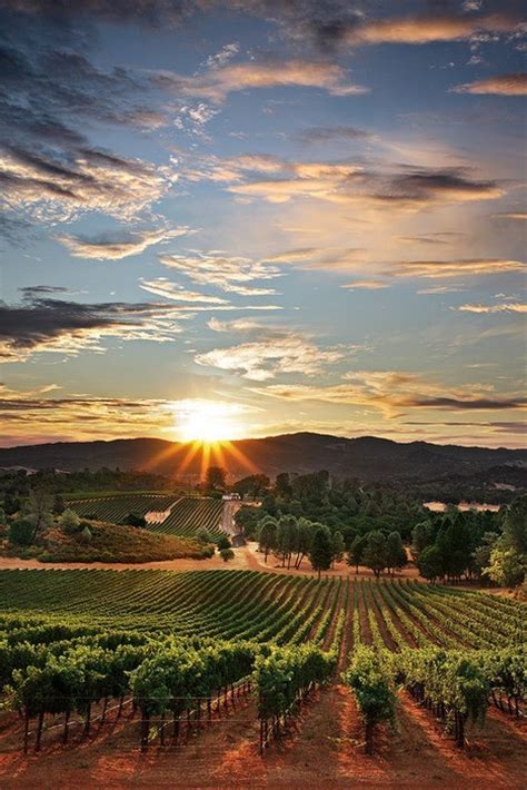 Photo Napa Valley by Photo Of The Day Napa Valley California Us Top Wines