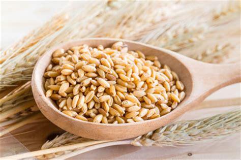 Hulled Barley organics wholesale organic hulled barley