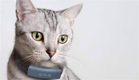 pet collar the best pet trackers gps and smart collars for dogs and cats