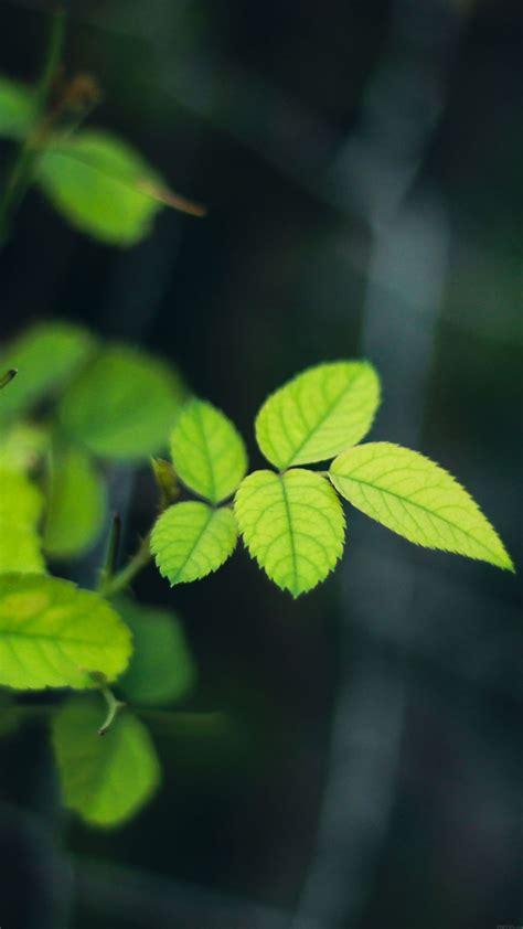 mc wallpaper greenish flower leaf papersco