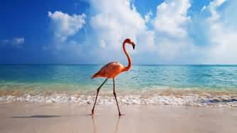 free download flamingo wallpapers wallpapercraft