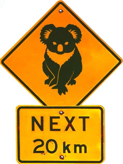 printable australian road signs my favorite animal postcards koala crossing sign from