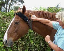 Cribbing Horses Treatment by Why Do Horses Crib
