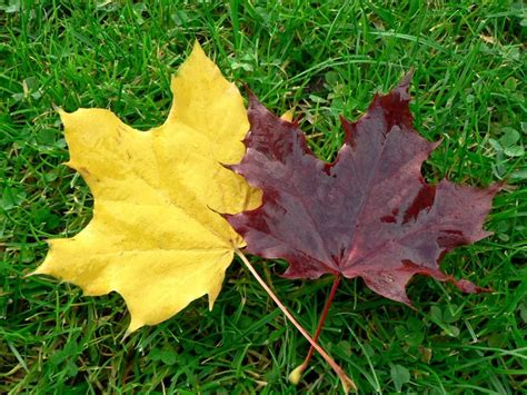 free picture autumn leaves grass
