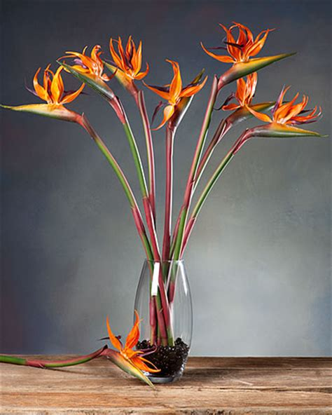 silk birds of paradise stems for casual decorating at petals