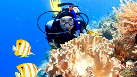 crystal waves scuba diving phuket padi 5 star idc
