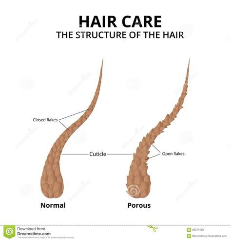 how to take care of the hair cuticle how to take care of the hair cuticle cheap hair easy up