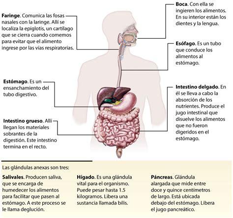 aparato digestivo sistema digestivo el sistema digestivo video presentaci