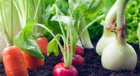 son los alimentos organicos secretaria de agricultura ganaderia desarrollo rural
