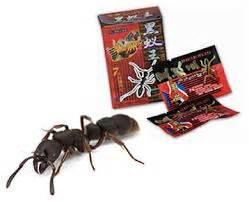 Jual Africa Black Ant Kaskus jual obat africa black ant jamu kuat lelaki sejati