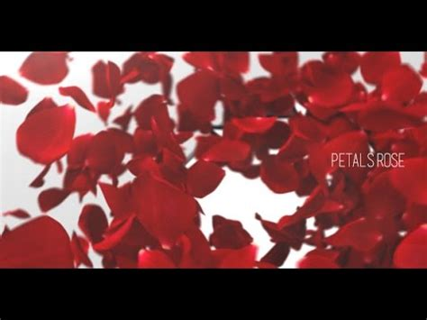 Petals Rose Reveal After Effects Project Videohive Template Youtube Falling Flower Petals After Effects Template Free