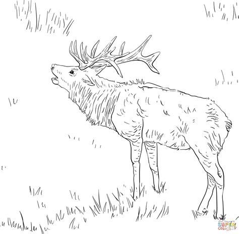 deer fighting coloring pages tules eland kleurplaat gratis kleurplaten printen