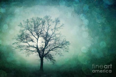 magic tree magic tree photograph by priska wettstein