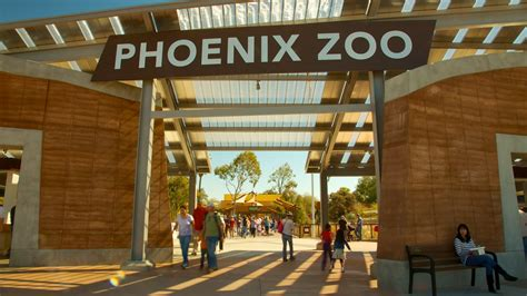 zoo lights phoenix az phoenix zoo pictures to pin on pinterest pinsdaddy