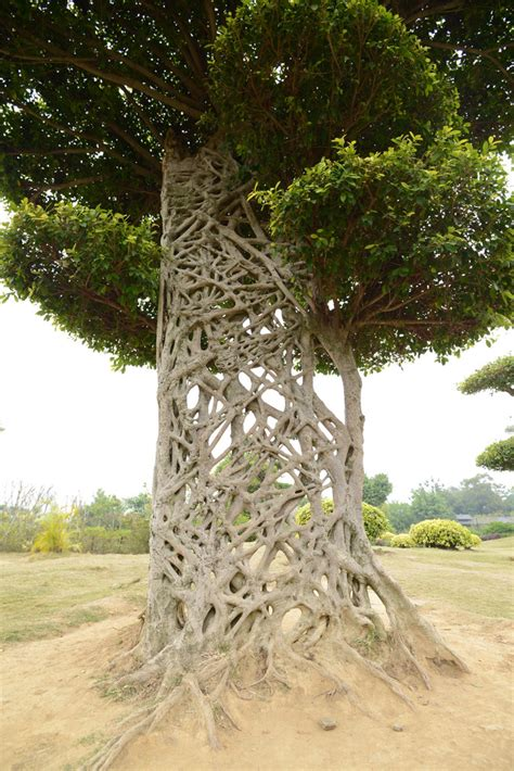 web tree a tree trunk similar to spider web appears in nanning zimbio