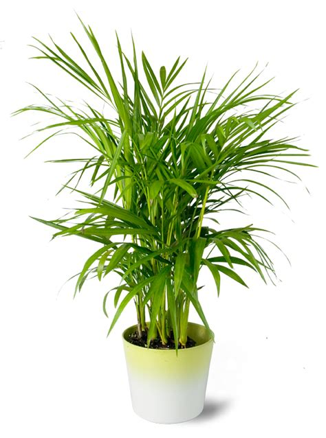 indoor plants for cats five air purifying house plants that won t kill your cat domestic geek girl