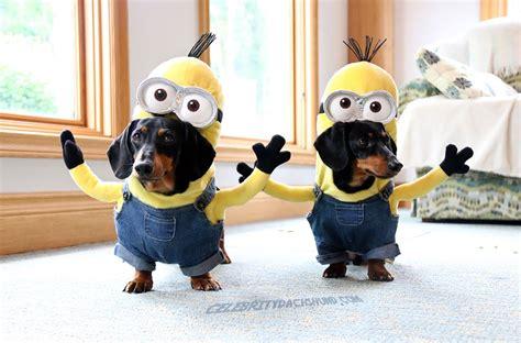minion dogs wiener minions