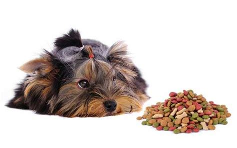 best food to feed a yorkie best food for yorkies or yorkie puppies the right way to feed your yorkie yorkiemag