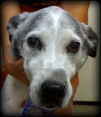 bump on s snout lump problem the vet