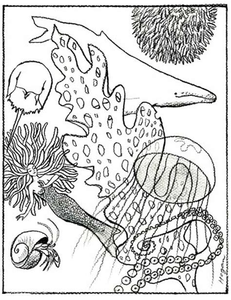 coloring book on tidal tide pools coloring pages