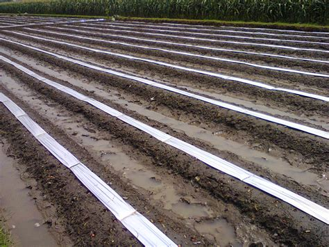 Pupuk Yang Cocok Untuk Tanah Merah cara menanam budidaya bawang merah di musim penghujan