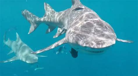 film barat ikan hiu asyik syuting di sarang predator laut bintang film panas