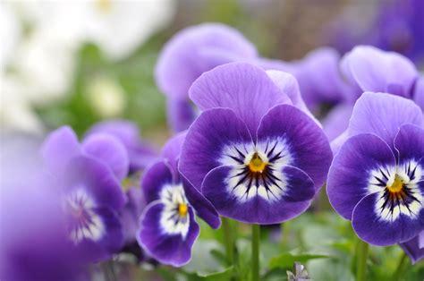 Garten Pflanzen Februar by Gartentipps Im Februar Ziergarten Gartenzauber