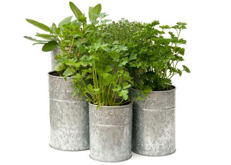buy planters buy galvanised metal planters