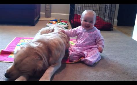 Sleeping Golden Retriever Is Immune To Baby S Charms