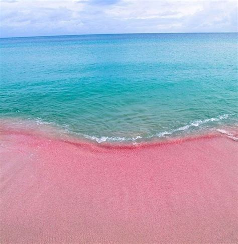 beaches with pink sand wish you were here pink sands beach bahamas